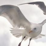 A gaivota que não pesca e a sociedade brasileira