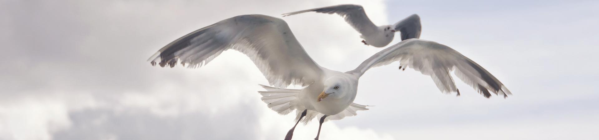 gaivotaquenaopescaeasociedadebrasileira