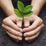 Sobre plantar, cultivar e colher