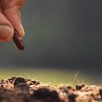Sobre plantar e colher